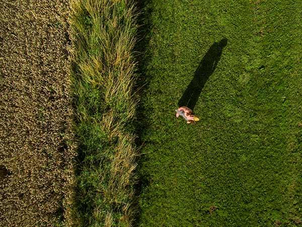 Aufnahme mit einer Drohne von einer jungen Frau mit Hut sitzend auf einer grünen Wiese