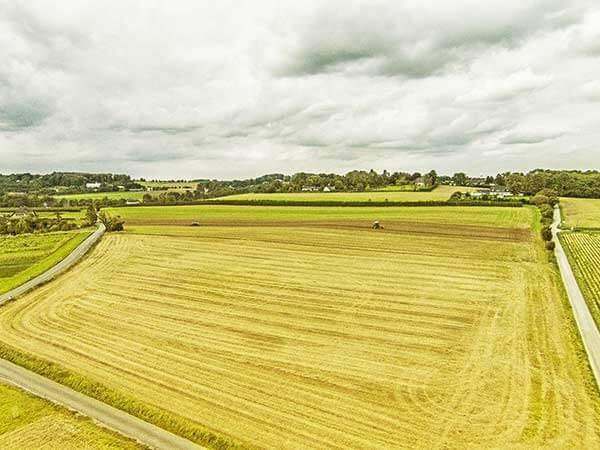 Strahlend gelbes Feld auf dem eine Landmaschine Ackerbau betreibt