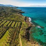 Weinanlagen am Strand von Italien